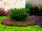 Love the colors in this landscaping!