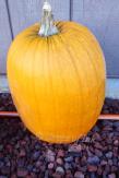 Deep pumpkin orange..
